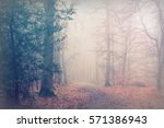 english woodland on a foggy... | Shutterstock . vector #571386943