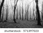english woodland on a foggy... | Shutterstock . vector #571397023