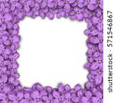 square frame of lilac flowers.... | Shutterstock .eps vector #571546867