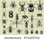 big set of insects bugs beetles ... | Shutterstock .eps vector #571629763