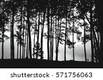 trees silhouette in the mist | Shutterstock . vector #571756063