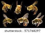 flying bees  | Shutterstock . vector #571768297