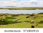 Panoramic Landscape Of A Herd...