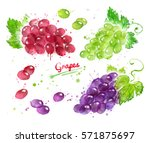watercolor collection of... | Shutterstock . vector #571875697
