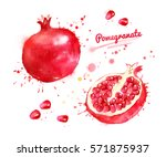 watercolor illustration of... | Shutterstock . vector #571875937