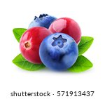 isolated cranberries and... | Shutterstock . vector #571913437