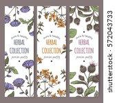 Set Of 3 Color Vector Herbal...