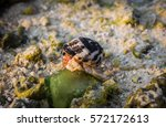 Hermit Crab As It Climbs On A...
