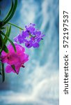 beautiful orchids and waterfall ...   Shutterstock . vector #572197537