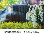 beautiful orchids and waterfall ...   Shutterstock . vector #572197567