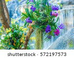 beautiful orchids and waterfall ...   Shutterstock . vector #572197573