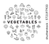 vegetable icon circle... | Shutterstock .eps vector #572197933