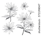 Vector Drawing Flowers Hand...
