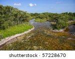 The Mangroves of Everglades National Park, Florida