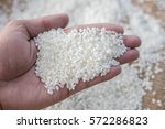 japanese rice  small milled rice | Shutterstock . vector #572286823