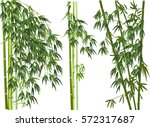 Illustration With Green Bamboo...