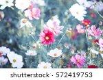 Flower Garden Flower Bouquets...