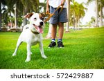 Jack Russell Dog With Owner An...