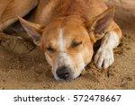 Sleeping Homeless Dog