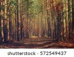 dark moody forest with birch... | Shutterstock . vector #572549437