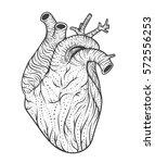 human heart line art. vector... | Shutterstock .eps vector #572556253