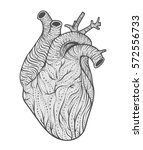 human heart line art. vector... | Shutterstock .eps vector #572556733