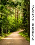 sunny forest trail | Shutterstock . vector #572590927