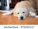 Stock photo dog sleeping and playing headshot 572635117