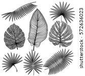 set tropical leaf isolated....   Shutterstock .eps vector #572636023