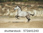 Grey Horse Playing