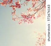vintage cherry blossom   sakura ... | Shutterstock . vector #572676163