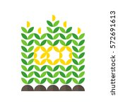 corn crop and eco lettering | Shutterstock .eps vector #572691613