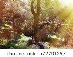 olive sunlit | Shutterstock . vector #572701297