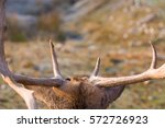 Point Of View Of Deer With...