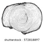 cross section of a tree trunk... | Shutterstock .eps vector #572818897