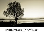 Tree Silhouette  Black And...