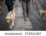 Stock photo dogs walking next to their owners 572921287