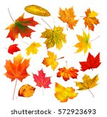 collection beautiful colourful... | Shutterstock . vector #572923693