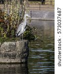 Small photo of Heron perched on edge of island at Alexandra Park in Oldham, Lancashire, England.