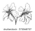 white tropical exotic flower... | Shutterstock . vector #573068737