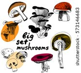 sketched edible mushrooms. big... | Shutterstock . vector #573146683