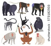 different types of monkeys rare ... | Shutterstock .eps vector #573182503