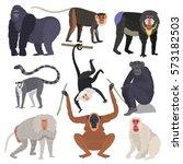 monkey set character  rare... | Shutterstock .eps vector #573182503