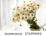 Daisies Near Window At Home In...