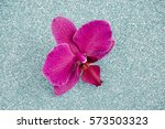 Fragrant Purple Orchid