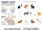 rabbit  lapin breed infographic ... | Shutterstock .eps vector #573621883