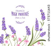 bunch of lavender flowers on a... | Shutterstock .eps vector #573711643
