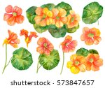 Watercolor Set Of Floral...