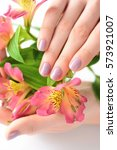 Small photo of Hands of a woman with dark red manicure on nails and flowers alstroemeria on a white background