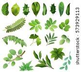 set of green leaves of trees... | Shutterstock .eps vector #573929113
